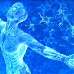 ヒト由来の幹細胞コスメで究極の若返り効果♡